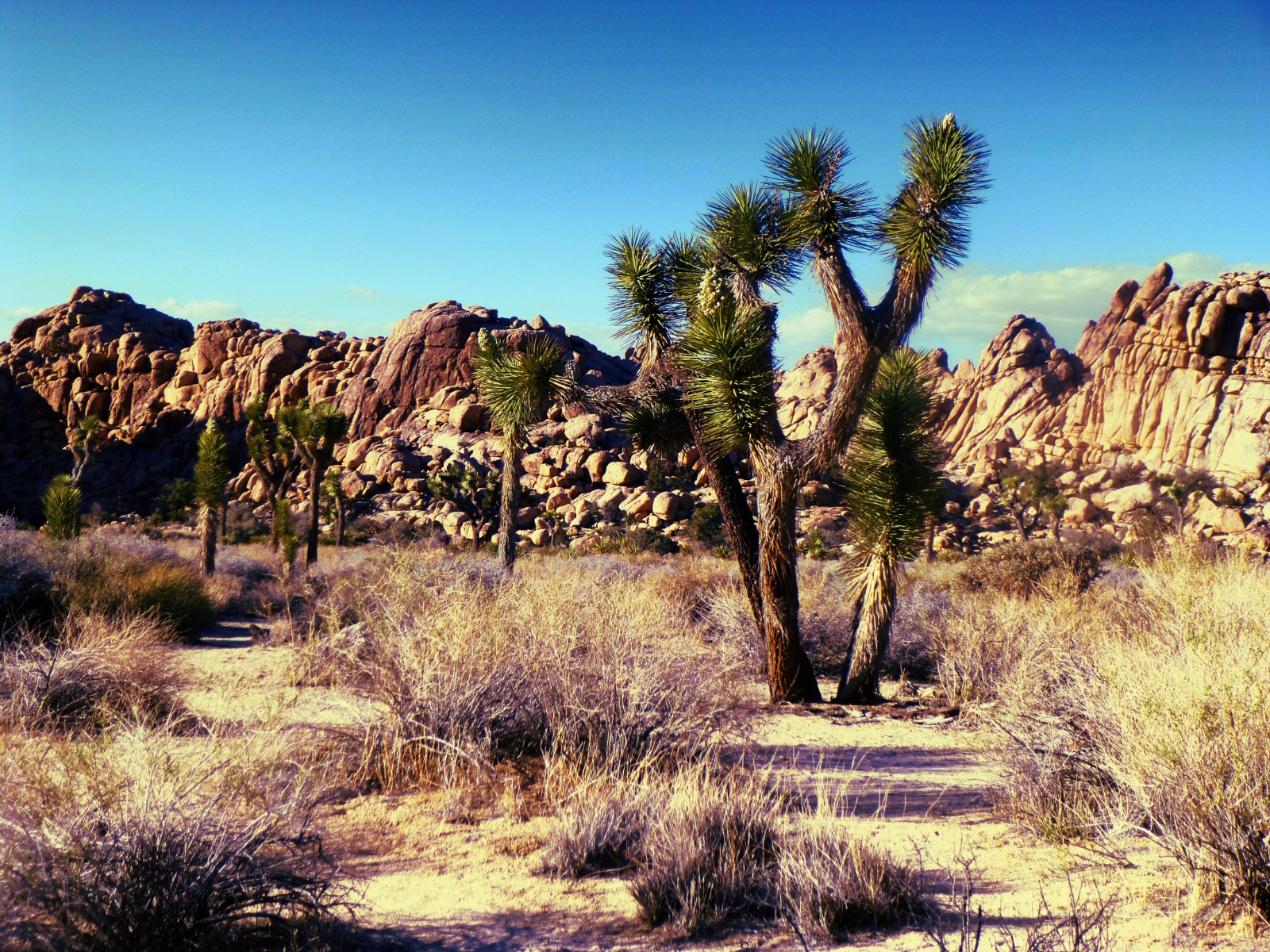 Visit Joshua Tree: Fun Things to Do and Where to Stay ...